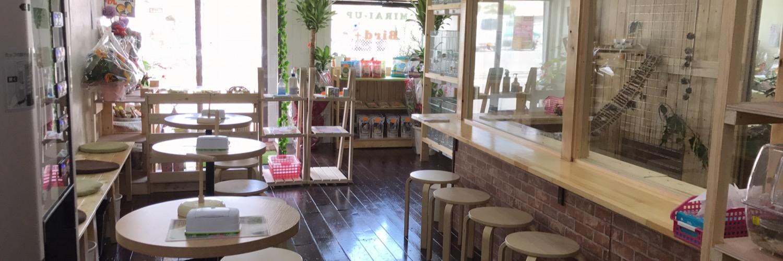 東大阪市の鳥カフェ、バードカフェMIRAI-UP Bird+店内