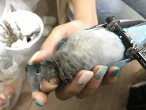 MIRAI-UP Bird+鳥カフェスタッフ